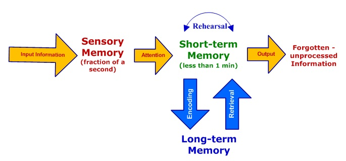 Stages Of Memory Sensory Short Term Long Term
