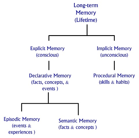 Long term memory chart