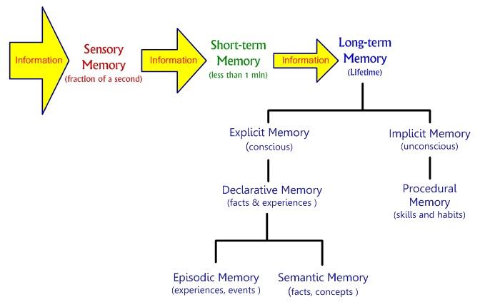 Memory to long term